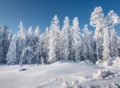 Neve do inverno — Fotografia Stock