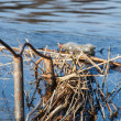 Foto de Stock  : Straw and litter in water