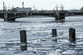 Seagulls over the Neva river with the Liteyny bridge on the back — ストック写真
