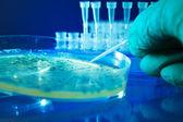 бактериальные колонии — Стоковое фото