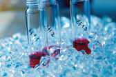 Biological Samples — Stock Photo