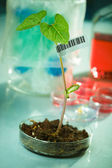 Genetically modified plants — Stock Photo