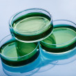 Petri dishes — Stock Photo