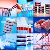 Genetics laboratory — Foto Stock