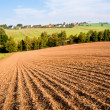 Plowed field — Stock Photo #25607113