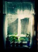 房子植物 — 图库照片