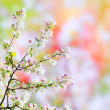 Blossoming tree — Stock Photo