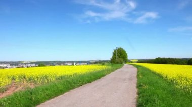 View of the road and a field of yellow flowers — Stock Video