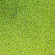 Green grass - texture — Stockfoto