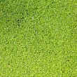 Green grass - texture — Stock Photo