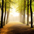 Fall in the wood — Stockfoto