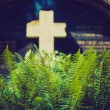 Fern at the grave with a cross — Stock Photo