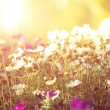 Bed of flowers and sunshine — Stock Photo #30858533
