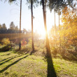 Sunrise in the summer forest — Stock Photo