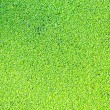 Duckweed on the surface of the pond water — Stock Photo