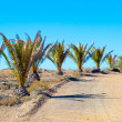 Palm trees in the desert — Foto Stock