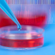 Stock Photo: Petri dishes and micropipette, pathogens test