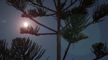 Time lapse moon rise over tropical tree — Stock Video