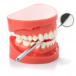 Dental jaw model with dental mirror — Stock Photo #40065239