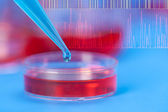Petri dishes and micropipette, pathogens test — Foto Stock