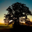 Silhouette of a tree at sunset — Stock Photo #43308957