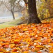 Fall leaves in the autumn tree in the park — Stock Photo