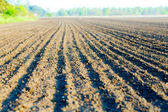 Plowed agricultural field — Stock Photo