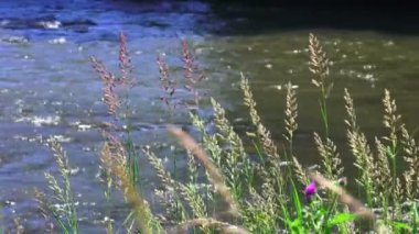 Plants on the river bank — Vídeo de stock