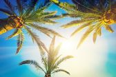 Three palm trees — Stockfoto