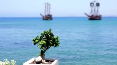 Sailing ships at sea on a background of a decorative plant tree, sailboat, sailing vessel — Stock Video