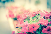 Decorative flowers — Stock Photo