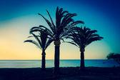 Three palms — Stock Photo