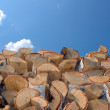 Birch firewood against the blue sky — Stock Photo