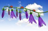 белл цветы с божья коровка — Стоковое фото