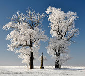 Winter tree — Stock Photo