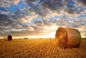 Straw bales — Stockfoto