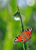 Rosa a motýl — Stock fotografie