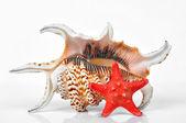 Tropikal deniz kabukları — Stok fotoğraf