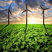 Sunflower field with wind turbines — Stock Photo