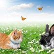 Cute rabbit with cat — Stock Photo