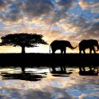 Silhouette two elephants — Stock Photo #13374502