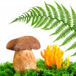 Mushrooms — Stock Photo #13520225