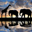 Silhouette elephants and giraffe - Stock Photo