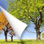 Spring and autumn tree — Stock Photo