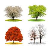 дерево в четыре сезона — Стоковое фото