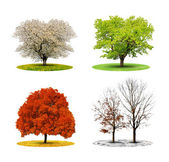 Tree in four season — Stok fotoğraf