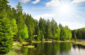 Small Arber Lake - Germany — Stock Photo