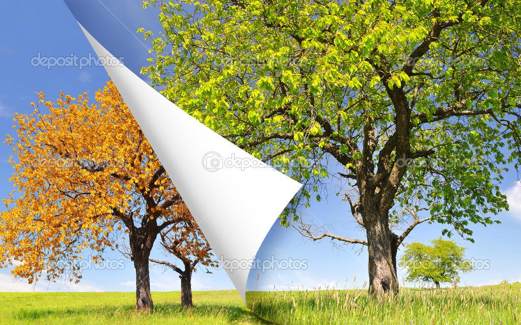 春天和秋天一棵树