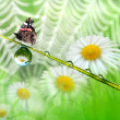 Dew and butterfly - Stock Photo