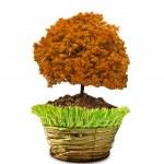 Autumn tree in pot — Stock Photo